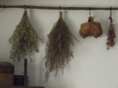 """Some of my drieds on an old primitive tobacco stick.  I use """"S"""" hooks to hang them."""