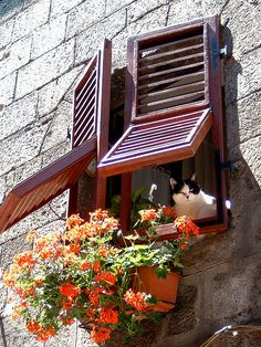 """Ciao Baby, Could someone please pick up a pizza with catnip for me."" -- Il solito guardone di paese...Italy window witih cat"
