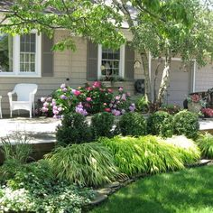 Like plantings around patio area (flowering shrubs and interesting tree)