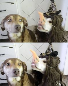 """37 Funny Animal Pictures That Will Make Your Day Funny Dogs 35 VERY Funny Animal Pictures 14 Dog Puns That Are So Corny, They'll Give You A Serious Case Of The Giggles """"Who invited this guy?"""" 37 Absolutely Hilarious Animal Pictures The B. Funny Animal Photos, Funny Animal Memes, Dog Memes, Cute Funny Animals, Funny Animal Videos, Funny Cute, Dog Pictures, Funny Dogs, Funny Pictures"""