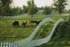Kentucky. Nothing more beautiful than a white fence on rolling hills with grazing horses on dewy spring morning!