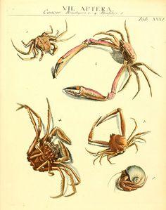 https://flic.kr/p/ac1Jnr | n438_w1150 | Dr. Sulzers Abgekürtze Geschichte der Insecten Winterthur :Bey H. Steiner ...,1776. biodiversitylibrary.org/page/11635605