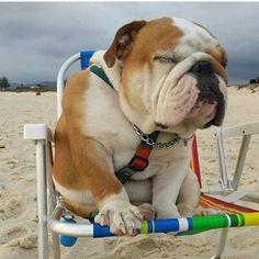 Napping at the beach!