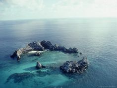 Devil's Crown, Galapagos, one of the coolest places I've ever snorkeled. I would love to go back there!