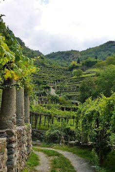 Carema, where you can take a beautiful hiking trail through their terraced vineyards. Piedmonte, Italy