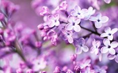 #1756, Widescreen flowers image