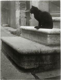 Brassaï Le chat noir sur les marches Paris, circa 1945 [From the Réunion des Musées Nationaux]