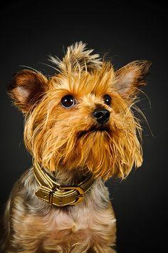Dog    Like, Repin, Follow :)