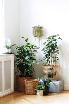 woven baskets with houseplants via søstrene grene stores / sfgirlbybay