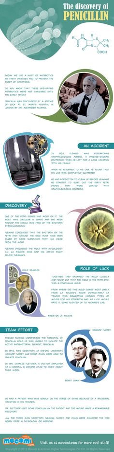 The Discovery of Penicillin Infographic