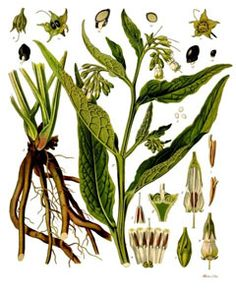 Comfrey - caution with internal use