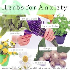 If something is on your mind use these herbs to help you get through your troubles.