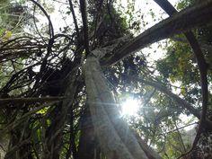 Ayahuasca - Die Kraft aus dem Dschungel
