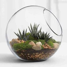 Modern Gardening Modern Garden Idea - This modern spin on the terrarium brings sophistication and nature to any room. Our kit makes creating this natural scene easy and comes with everything needed. Detailed instructions are included. Cactus Terrarium, Glass Terrarium, Terrarium Ideas, Terrarium Scene, Planting Succulents, Planting Flowers, Indoor Succulents, Cacti Garden, Fairies Garden