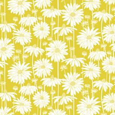Sunshine Daisy Art Print by Jill Byers