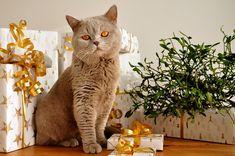 Блог Эвелины Гаевской: Почему он делает подарки, а ей не нравится?