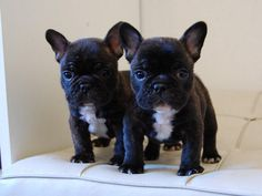 These Frenchies