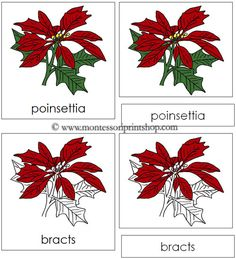 Poinsettia Nomenclature Cards - Printable Montessori Nomenclature for Montessori Learning at home and school.