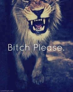 Bitch please quotes photography animals outdoors cats bitch lion