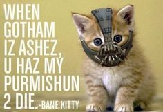 Bane kitty (The Dark Knight Rises) As long as this is not real, then it's cute. I may be on a small, nerdy Batman kick because of this movie..