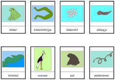 woordkaarten kikkers