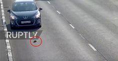 Glück gehabt: Mann rettet Katze auf Autobahn! #News #Unterhaltung