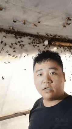 Animated GIF - Is this guy not at all afraid of these dangerous insects? Funny Videos, Great Videos, Funny Owl Pictures, 9gag Funny, Funny Memes, Small Movie, Funny Owls, Fail Video, Gifs