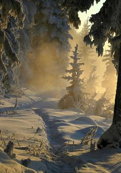 Winter forest in Carpathian mountings, UKRAINE, from Iryna