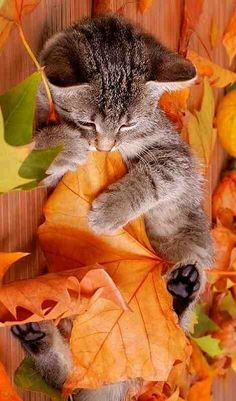 Leaves and kittens.