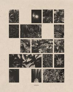 Do Plants Feel? - Cortney Cassidy