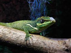 Multimar Wattforum in Tönning Animals, Holiday Photos, Animales, Animaux, Animal, Animais