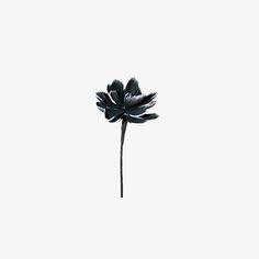 WHITE TIP BLACK FLOWER CLC-7106. Vixen & Velvet White Out Collection 2014.