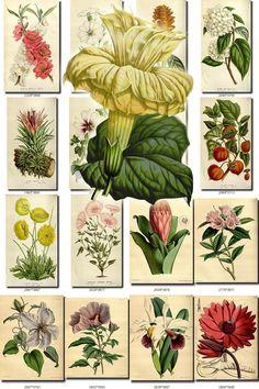 FLOWERS 98 Collection Of 275 Vintage Images Paper Decoration Beautiful Florist Botanical Pictures Hi