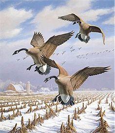 "Wildlife Prints By David Maas (Limited Edition Print): ""Winter Wonder- Canadian Geese"" - David Maass"