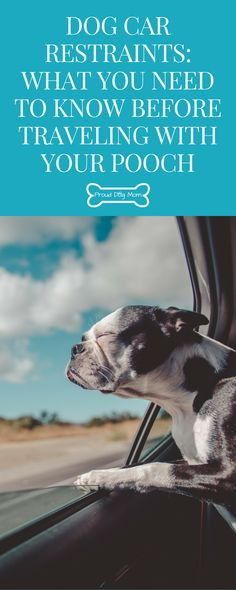 Dog Car Restraints: What You Need To Know Before Traveling With Your Pooch | Dog Travel Tips | Dog Car Accessories, Dog Travel, Travel Tips, Dog List, Dog Safety, Dog Costumes, Outdoor Dog, Dog Training Tips, Safety Training