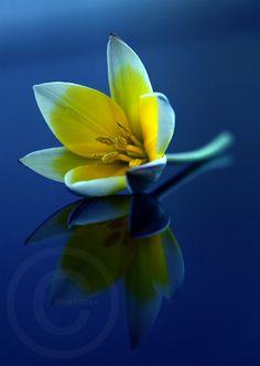 reflection | reflection photo431 Hidden Beauty: 45 Splendid Examples of Reflection ...