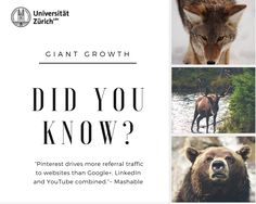 The ultimate guide to hands-on, successful and sustainable social media growth - written by students @ University of Zurich Did You Know, Social Media, Student, Writing, Nice, Youtube, Movie Posters, Film Poster, Popcorn Posters