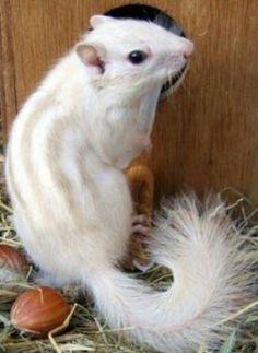 White squirrel                                                                                                                                                                                 More