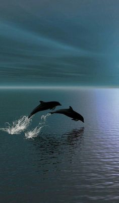 Freedom: Two Dolphins in The Ocean. (Fact: Dolphins establish very strong social bonds. Their hearing of frequencies is ten times, or more, above the upper limit of adult human hearing. Orcas, Beautiful Creatures, Animals Beautiful, Beluga Wal, Photo Animaliere, Fotografia Macro, Delphine, Water Life, Ocean Creatures