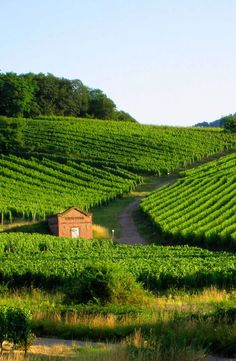 Vines 101: An Introduction to Alsace Wine.  http://www.butterfield.com/blog/2014/08/08/vines-101-alsace-wine/  #travel #France #Alsace #wine #cuisine #drink #holiday #vacation #trip #myBNR