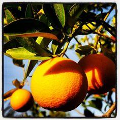 arance. Sicilia.   #TuscanyAgriturismoGiratola