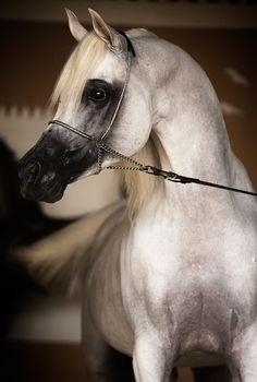 Sultan's Most Treasured Raphael_Macek