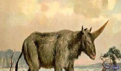 تعايش أهالي سيبيريا مع حيوان وحيد القرن: عثر علماء الأثارالكازاخستانيونفي محافظة بافلودار على متحجرات وحيد القرن الذي أطلقوا عليه لقب…