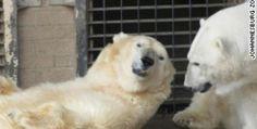 Wang, A Polar Bear Died Because of Broken Heart