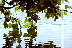 water, tree, calm, peaceful, lacy marie photography