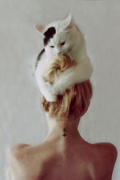 putting my thinking cat on #cats #kittens #cat #kitten #pets #animals #girls #style #hairdo #love #cute #awesome #funny #kitty