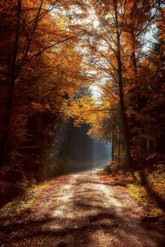 A forest in autumn.
