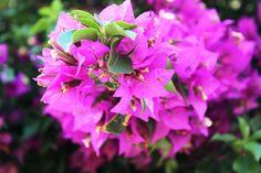Blumen / Flowers 2013