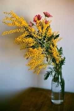 floralls: (by v.a.l.e.n)