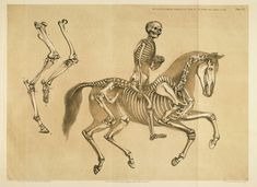 Hawkins, Benjamin Waterhouse / A comparative view of the human and animal frame  (1860)  //  [Plate four and five - Rider, and horse, and explanatory text], pp. 16-17